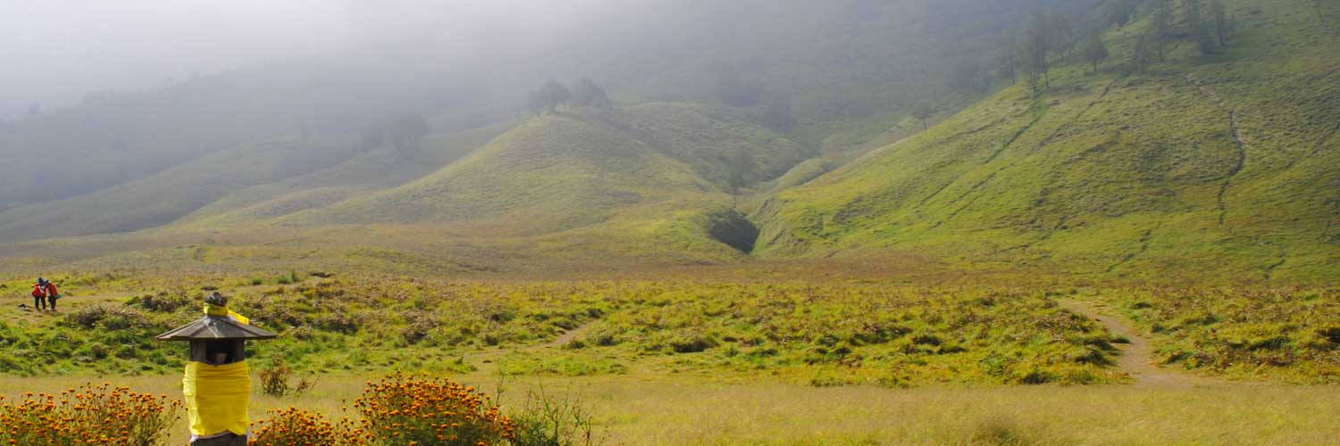the green savanna south of mount Bromo